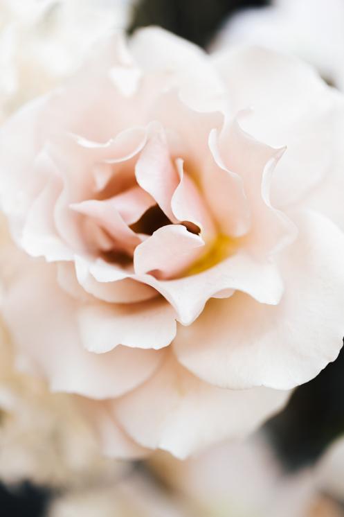 TheSaltStudio_悉尼小型婚礼_悉尼订婚仪式_悉尼小型结婚仪式_YvetteAaron_11.jpg
